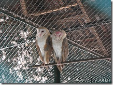 owls at thrissur zoo