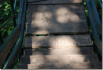 Shaky wooden planks at thenmala