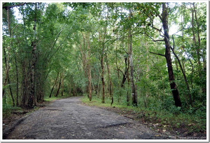 Sholayar forest