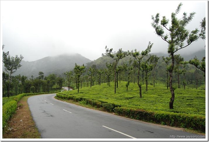 Aliyar - Valparai tea plantations
