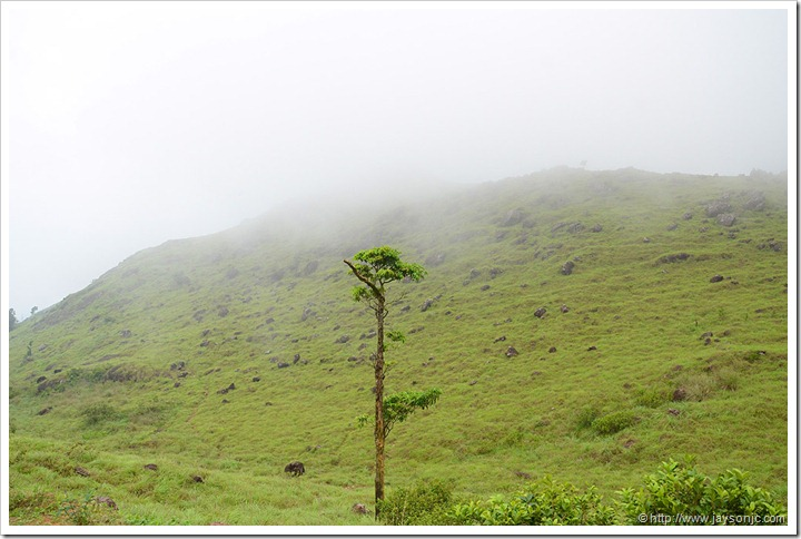 View from Ponmudi Top