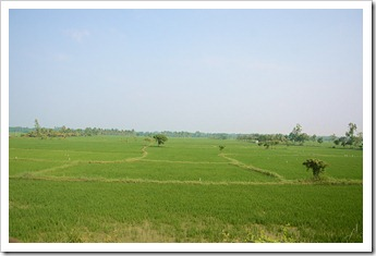 Paddy fields along the way