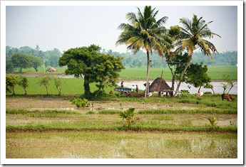 November is the green month in Tamilnadu