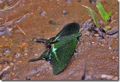 gavi_butterflies