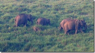 Elephants in Gavi